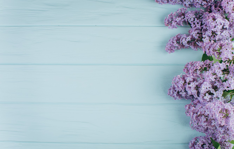 Фото обои цветы, ветки, весна, summer, цветение, wood, blossom, flowers, сирень, spring, violet, lilac