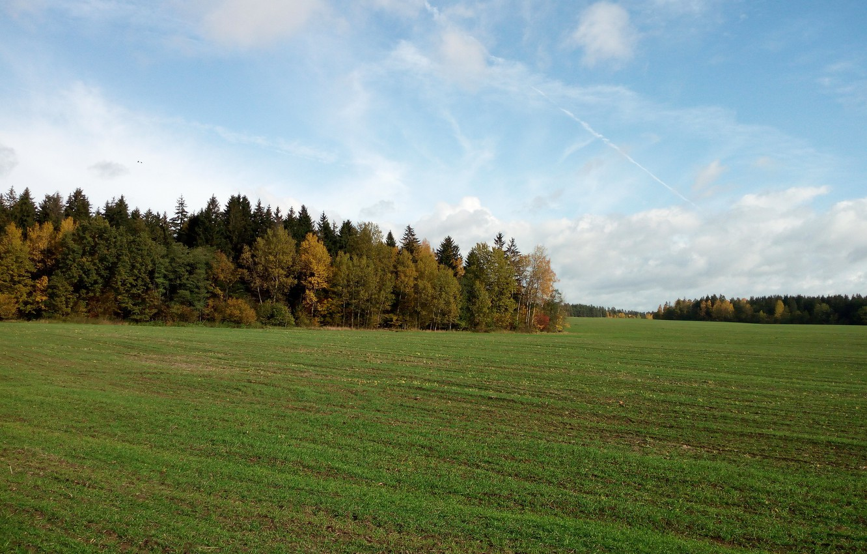 Фото обои поле, небо, трава, деревья