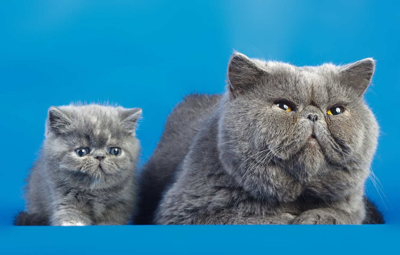 Фото обои кошки, фон, коты