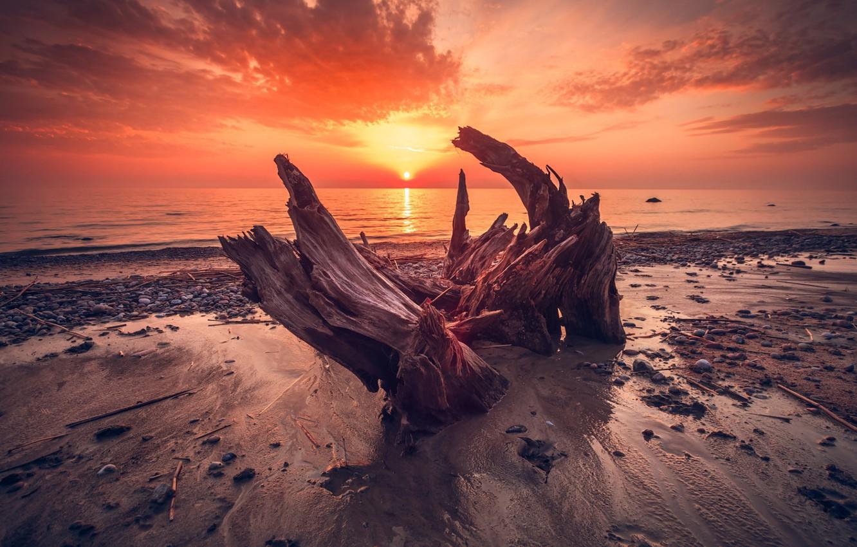 Фото обои beach, twilight, sky, sea, landscape, nature, sunset, wood, clouds, sun, dusk, sunlight, Trunk