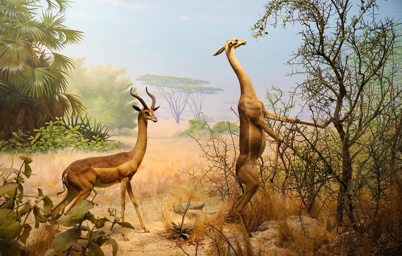 Фото обои животные, парк, картина, Сан-Франциско, Золотые ворота, Калифорнийская академия наук