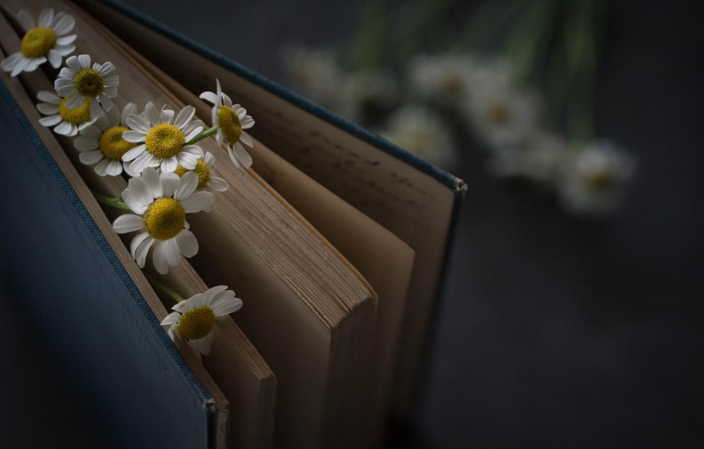 Фото обои Цветы, Книга, Ромашки