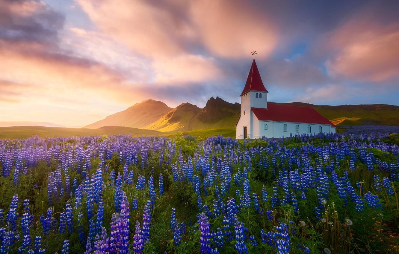 Фото обои цветы, природа, Весна, Лето, церковь, храм, Исландия