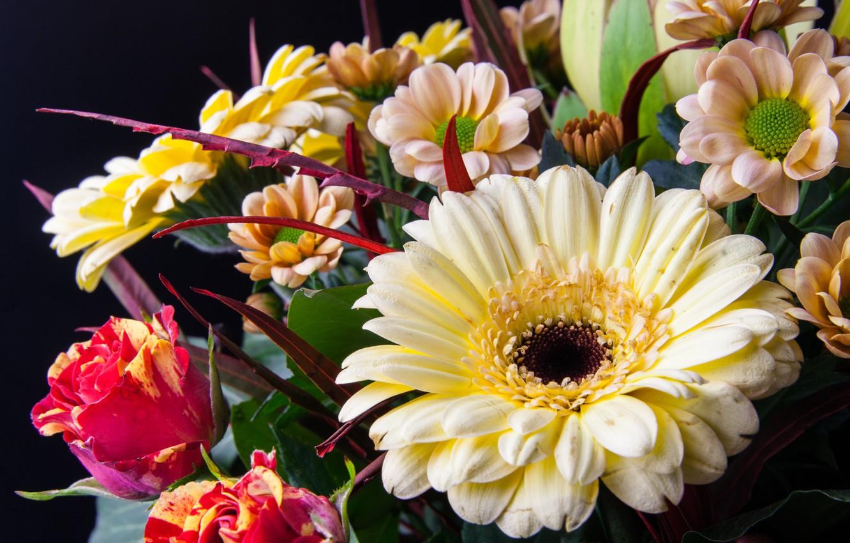 Цветы герберы и розы картинки