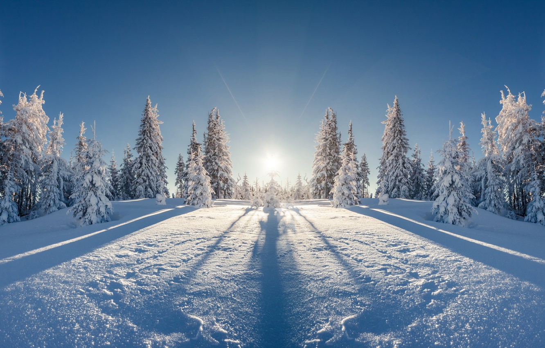 Фото обои зима, поле, лес, солнце, лучи, снег, пейзаж, отражение, красота, ели, мороз, простор, сугробы, тени, ёлки, …