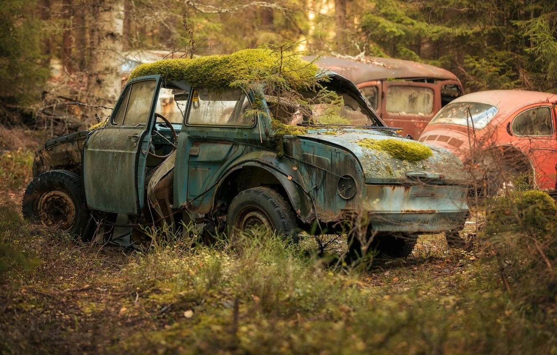 Фото обои машина, лес, лом