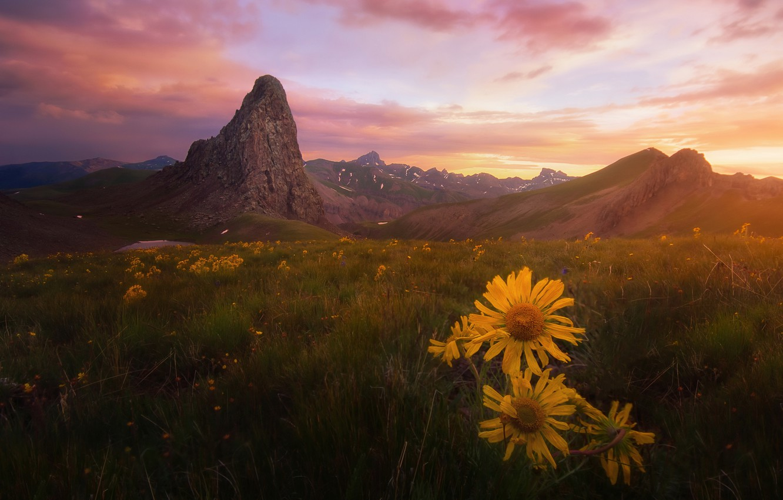 Фото обои поле, лето, небо, трава, облака, свет, закат, цветы, горы, настроение, холмы, вершины, даль, вечер, желтые, ...