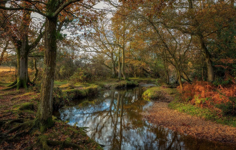 Фото обои осень, деревья, природа, озеро