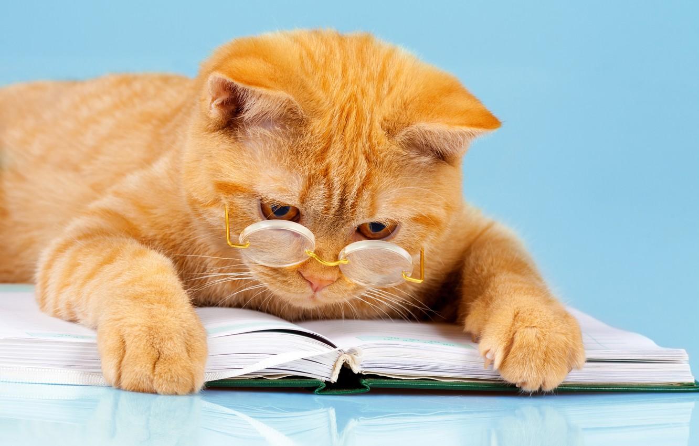 Фото обои кот, фон, юмор, лапы, рыжий, очки, лежит, книга, читает, умный