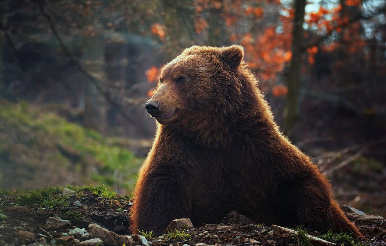 хотела фото медведя в осеннем лесу многие птицеводов