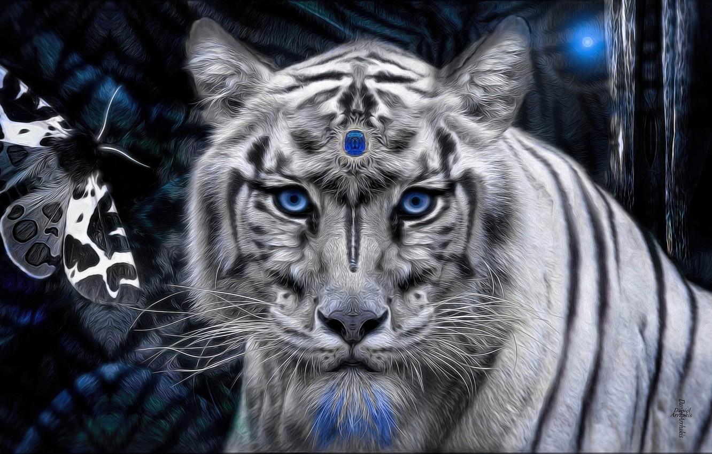 картинки на рабочий стол белый тигр с голубыми глазами дает возможность внести