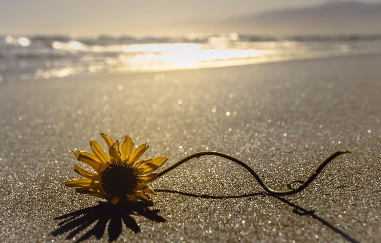 Фото обои море, цветок, берег