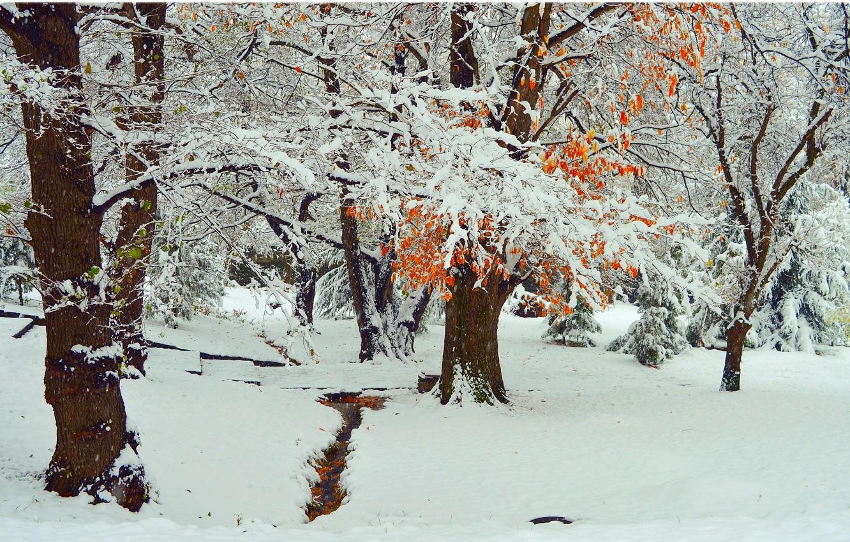 Фото обои Зима, Деревья, Снег, Парк, Мороз, Winter, Frost, Park, Snow, Trees