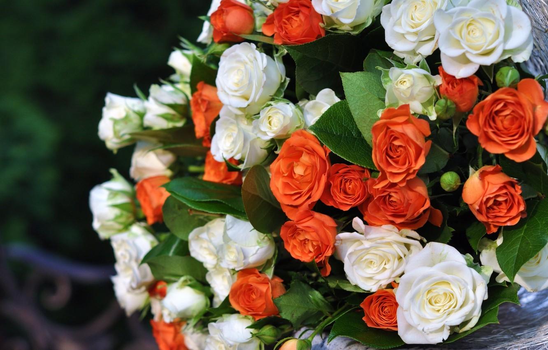 януковиче красивые цветы картинки розы белые черные красные оранжевые андрей, вашем рисунке