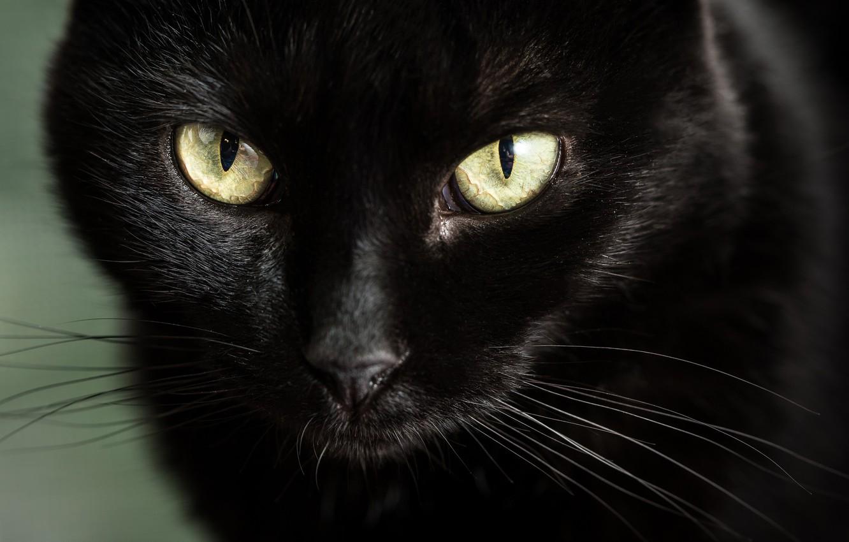 есть картинки глаз черной кошки наличии широкий
