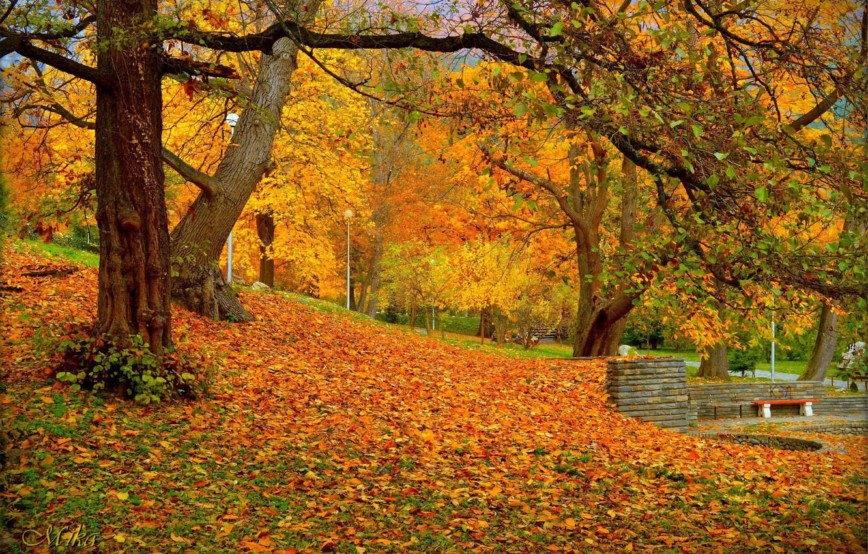 Фото обои Осень, Парк, Fall, Листва, Park, Autumn, Colors, Листопад, Leaves