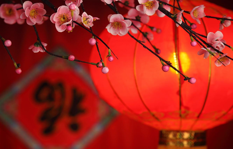 Фото обои цветы, ветка, лепестки, фонарик, Китай