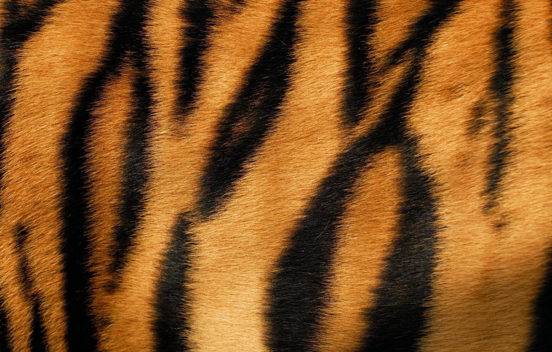 Фото обои тигр, шкура, мех, texture, animal, fur