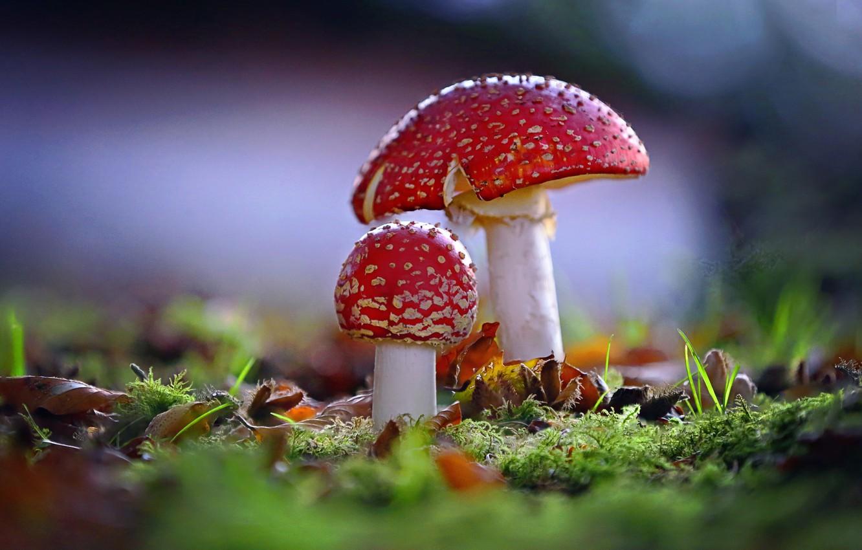 картинка яркого грибами поле тоже