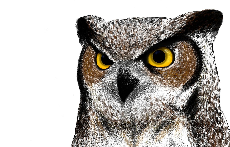 Фото обои сова, птица, живопись, owl