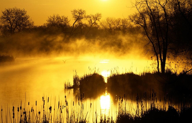 Фото обои трава, солнце, деревья, туман, утро, Болото