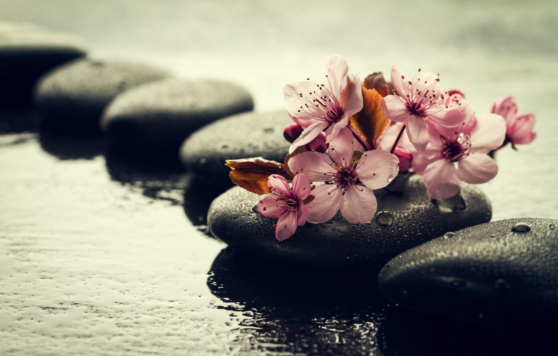 Фото обои вода, капли, цветы, камни, ветка, сакура