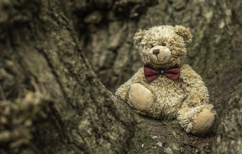 Фото обои дерево, игрушка, медведь, медвежонок, плюшевый мишка