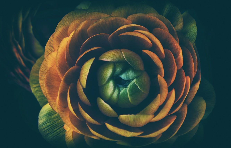 Фото обои цветок, макро, бутон, середина