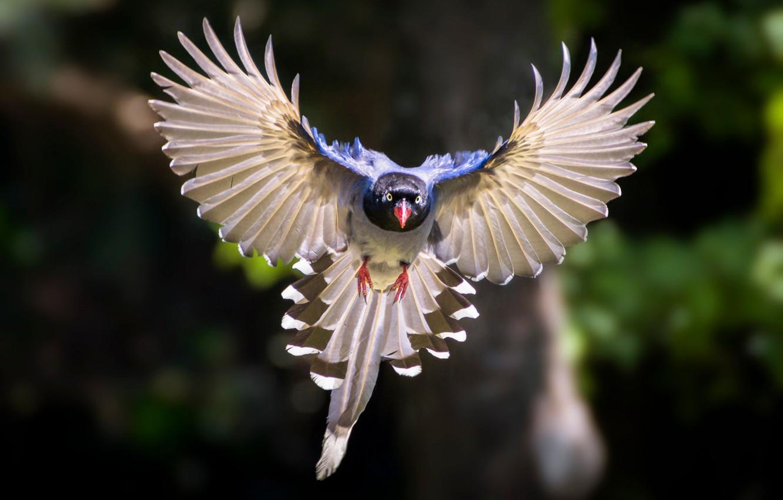 крыло птицы фотографии то