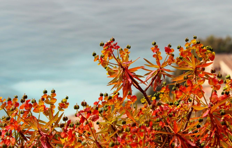 Фото обои листья, цветы, краски, растение