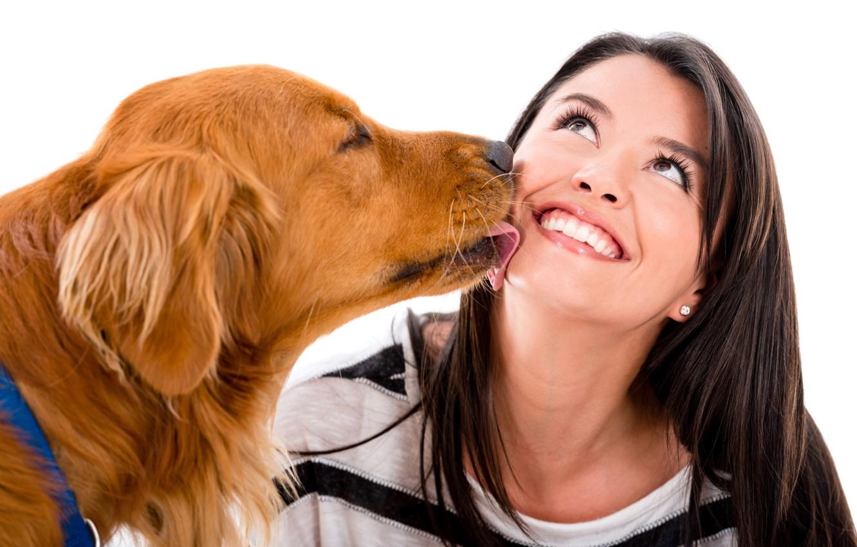 Фото обои девушка, радость, настроение, собака, брюнетка, белый фон, рыжая, ретривер