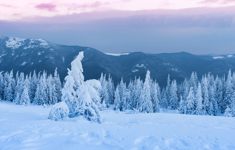 Фото обои зима, лес, небо, облака, снег, пейзаж, горы, тучи, пасмурно, холмы, вершины, красота, сказка, ели, сугробы, …