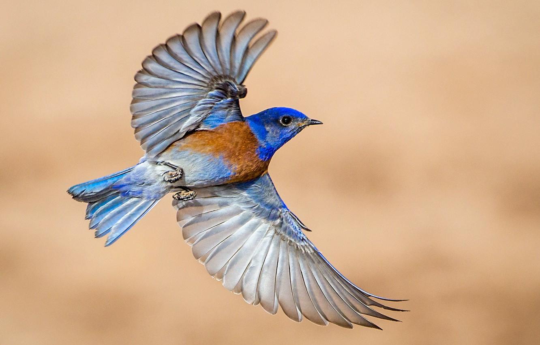 своим птица с голубыми крыльями картинки самые