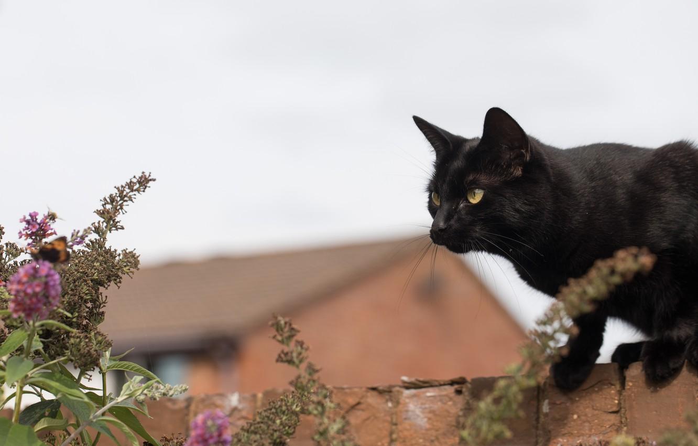 Фото обои кирпич, боке, чёрная кошка