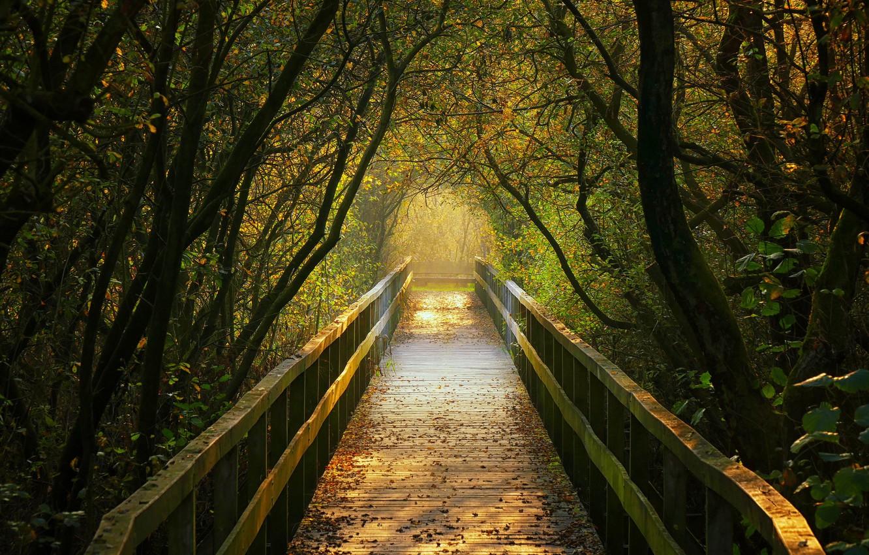 Фото обои осень, деревья, Германия, туннель, мостик