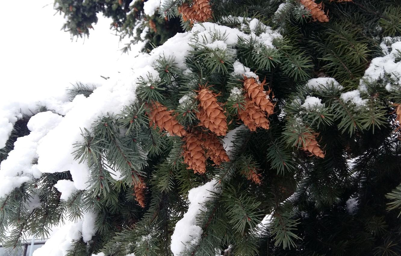 картинки на рабочий стол снег на елках зажимах имеются два