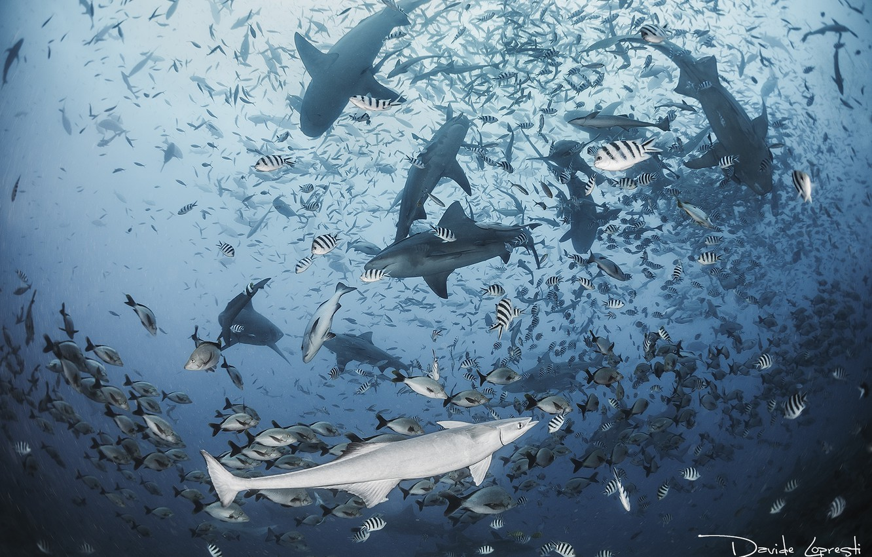 Фото обои море, океан, рыба, акула, акулы, подводный мир