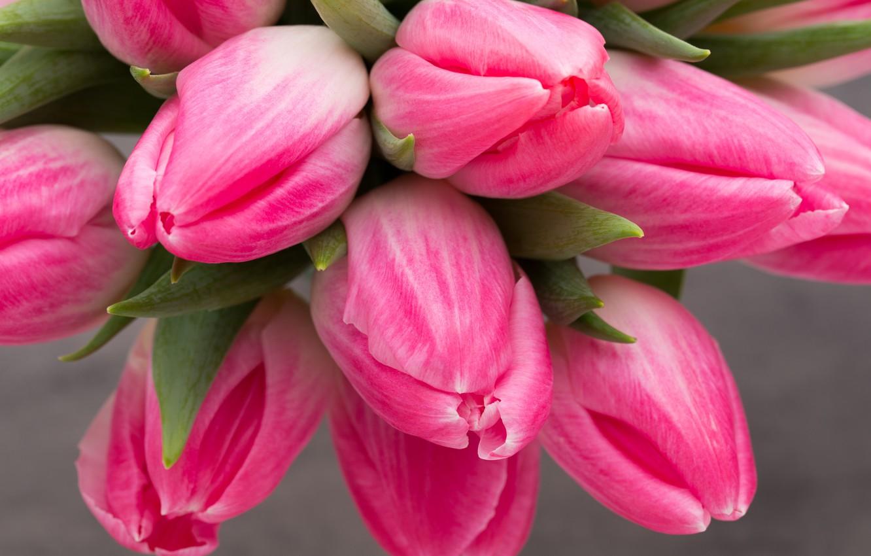 Фото обои цветы, букет, тюльпаны, розовые, fresh, pink, flowers, beautiful, tulips, spring