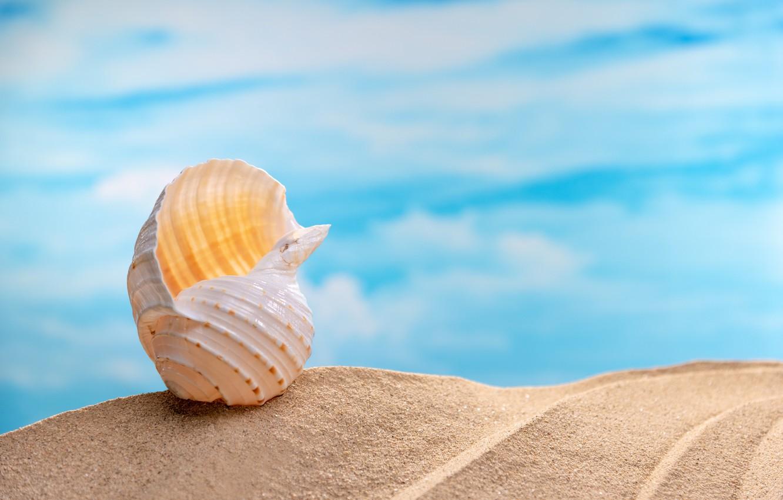только картинки с песком и ракушками необходимо ограничивать