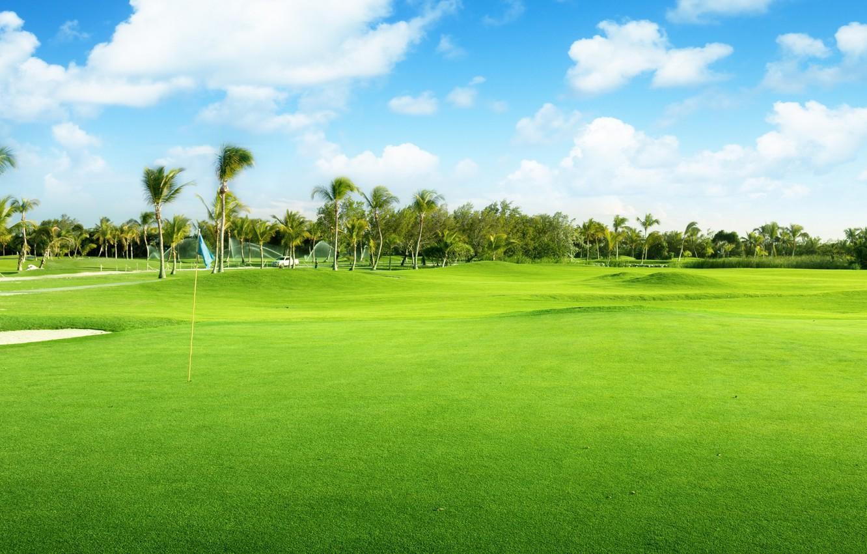 Фото обои природа, пальмы, травка, голубое небо