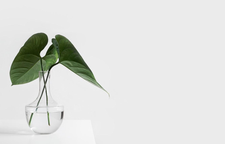 Фото обои стол, растение, белый фон, ваза, стеклянная