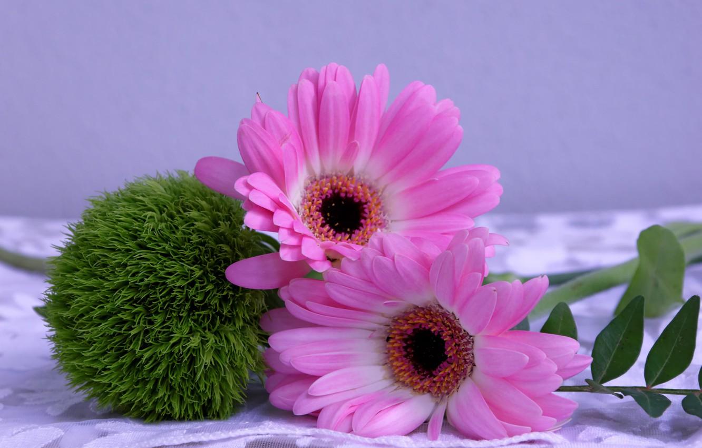 Фото обои цветок, цветы, шар, гербера