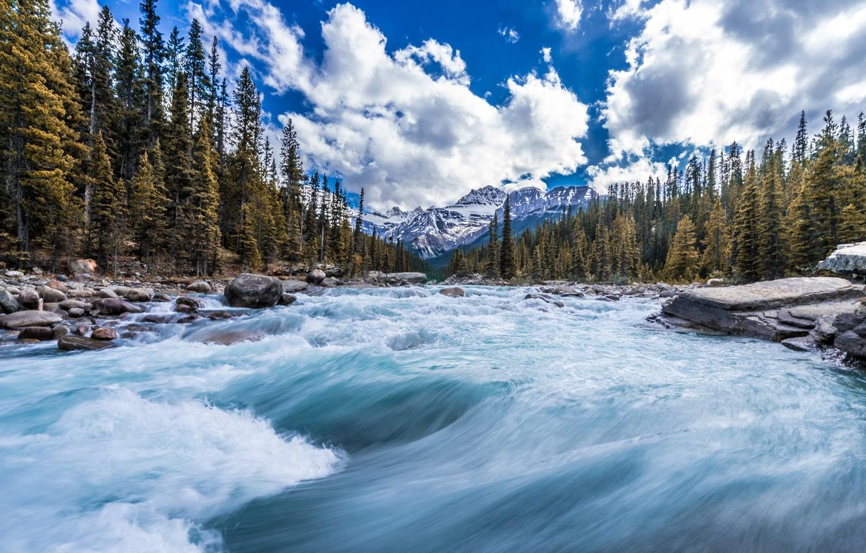 Фото обои лес, деревья, горы, река, поток, Канада, Canada, Канадские Скалистые горы, Canadian Rockies