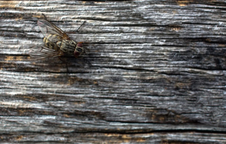 Фото обои природа, муха, фон