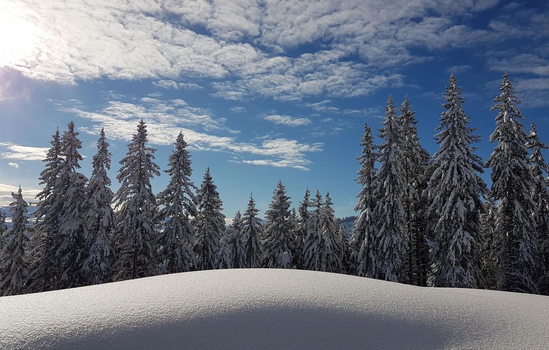 Фото обои зима, лес, небо, снег, Франция, ели, сугробы