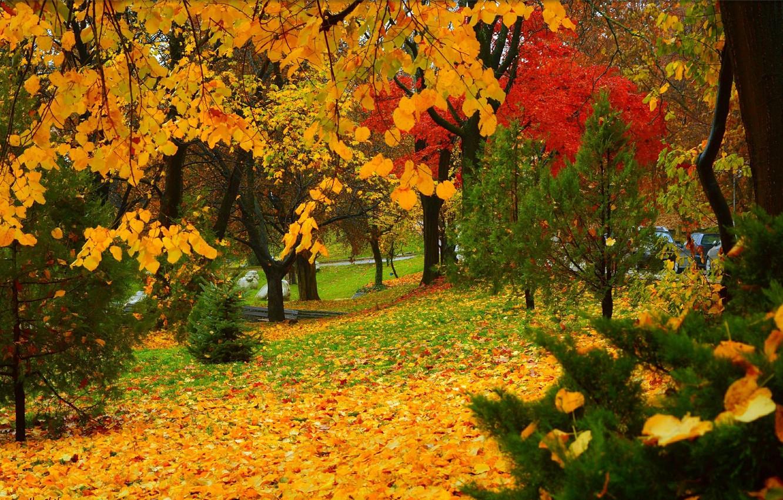 Обои leaves, trees, autumn. Природа foto 13