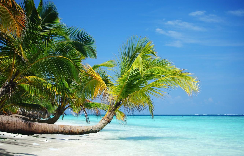 Фото обои песок, пляж, лето, тропики, пальмы, отдых, берег