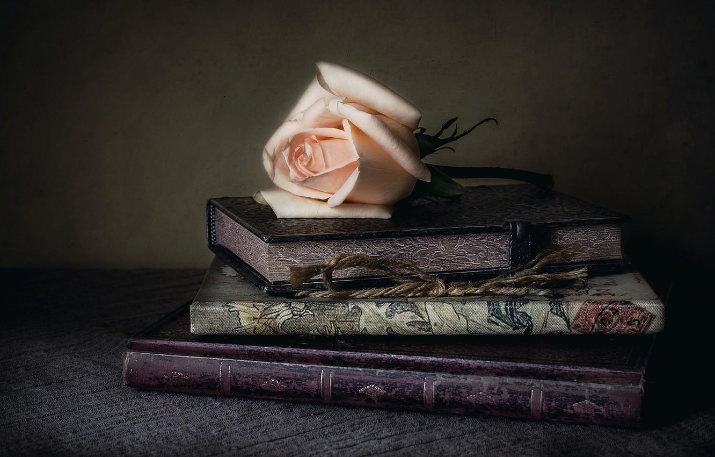 Фото обои стиль, роза, книги, бутон