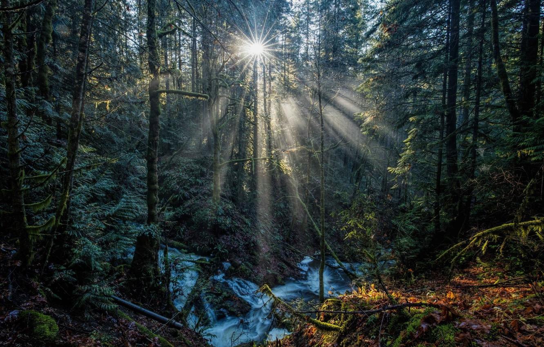 Фото обои лес, солнце, ручей