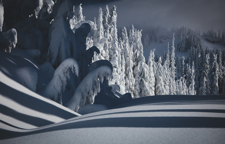 Фото обои зима, лес, снег, природа